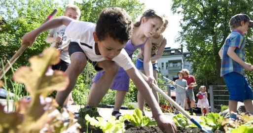 Einige Schüler harken ein Beet mit vielen verschiedenen Salaten durch. Es ist Sommer und die Sonne scheint.
