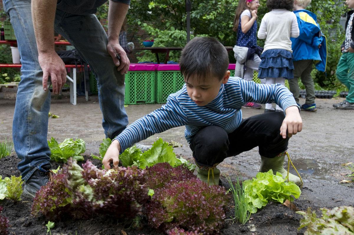 Ein Junge kniet vor einem Beet und schaut sich die groß gewachsenen Salatköpfe an un möchte sie ernten