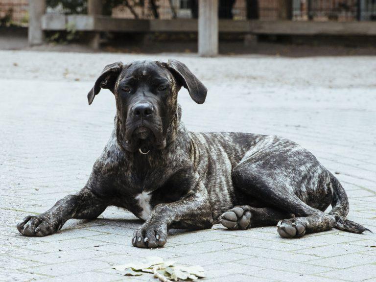 Ich bin Herbert, der Hund vom Hausmeister Enrico Baumhöfer.