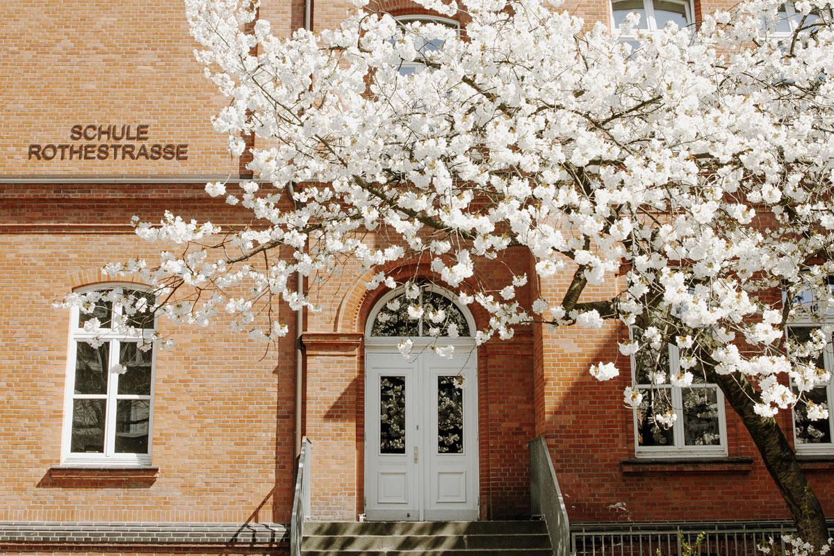 Hier sieht man im Frühling den Eingang der Schule Rothestraße. Es scheint die Sonne und die Zierkirsche davor blüht schneeweiß.